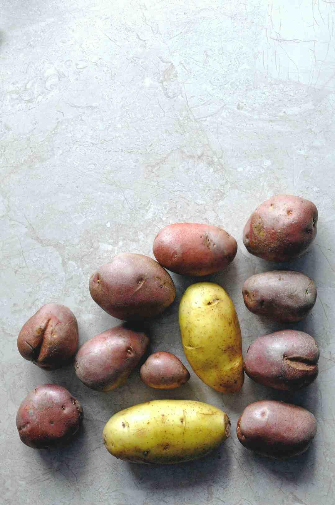 Quand planter des pommes de terre germées ?